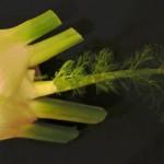 Ofenfenchel mit Orangen-Oliven-Gremolata