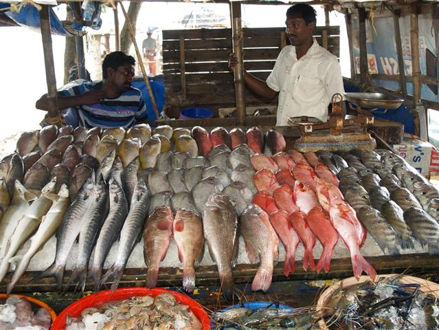 Fischmarkt Indien