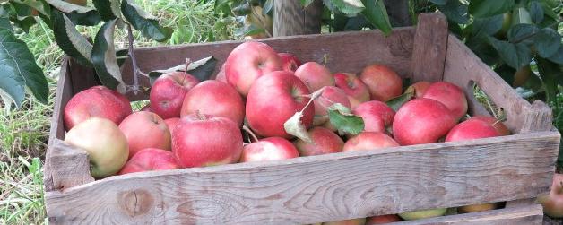 Äpfel mit Bedeutung