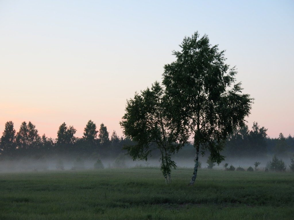 Nebel in Lettland