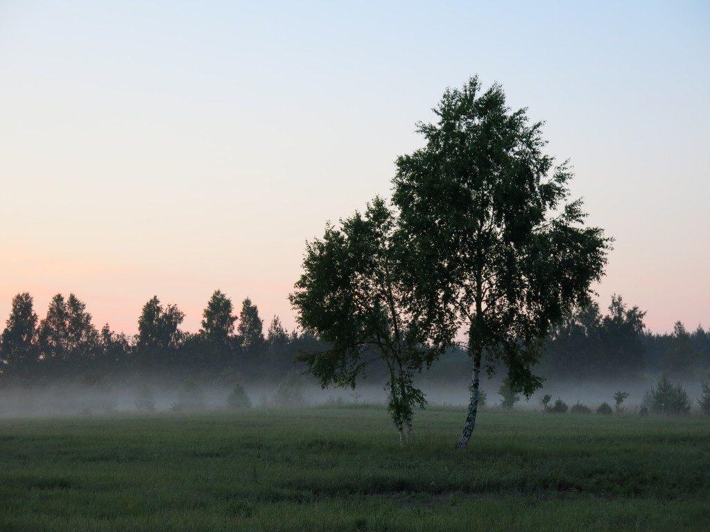 Nebel in Lettland