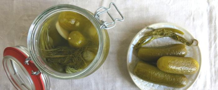 Salzgurken fermentieren oder die Lust am Unberechenbaren