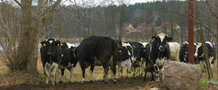 Biokisten, Zicklein und Hühnerbrühe: Besuch im Ökodorf Brodowin